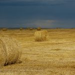 Haybales before the storm, southern Alberta